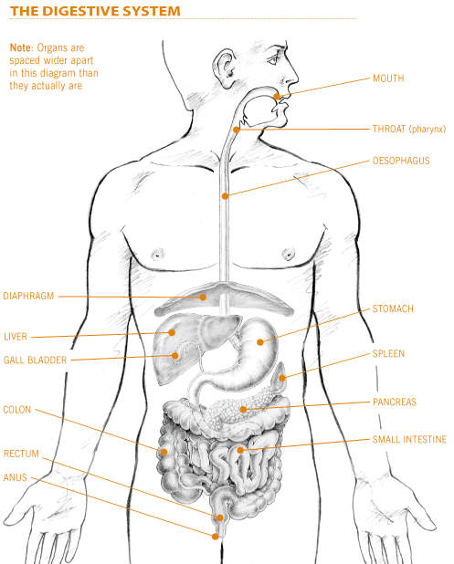 Can A Stool Sample Detect Stomach Cancer
