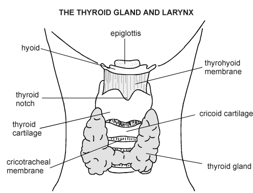 cancer concerns us home page thyroid pathway blank thyroid diagram #6